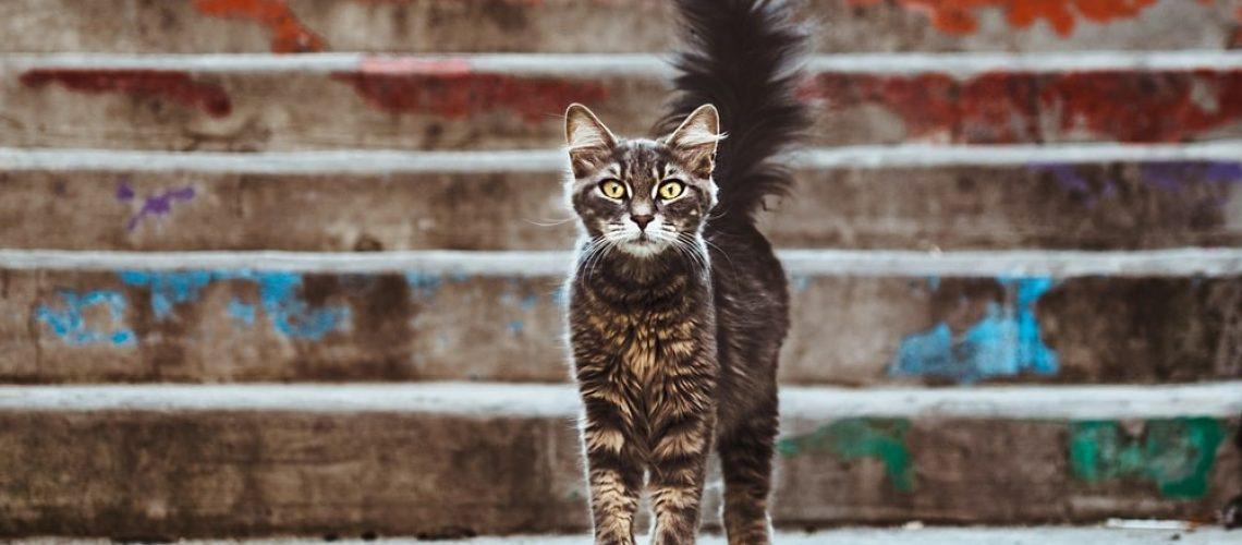 Curious-cat-2